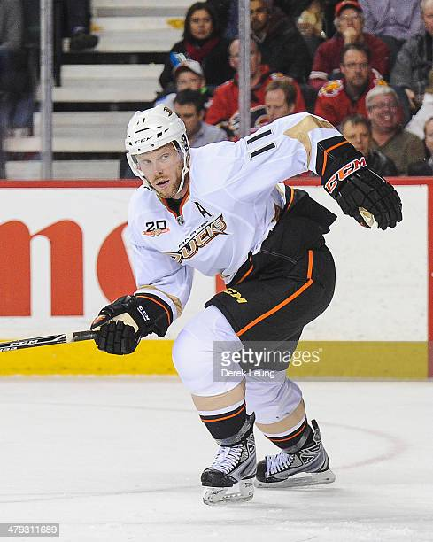 Saku Koivu of the Anaheim Ducks in action against the Calgary Flames during an NHL game at Scotiabank Saddledome on March 12 2014 in Calgary Alberta...
