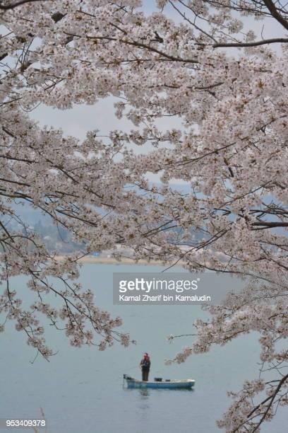 Sakura and a boat