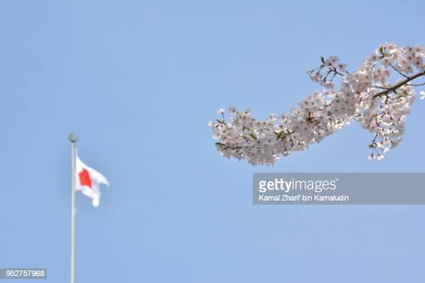 Sakura and Japan flag