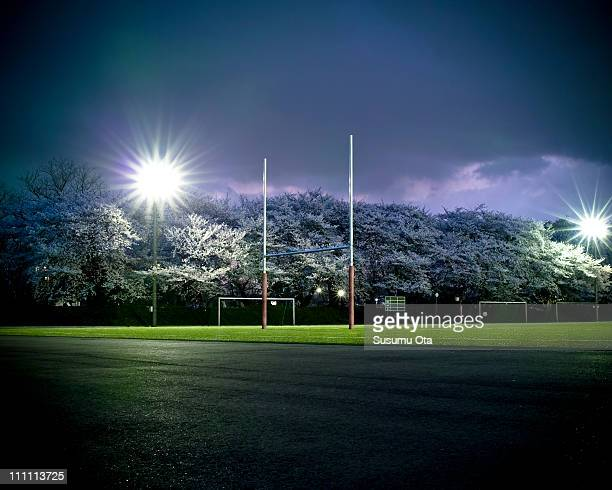 Sakura and rugby field at night