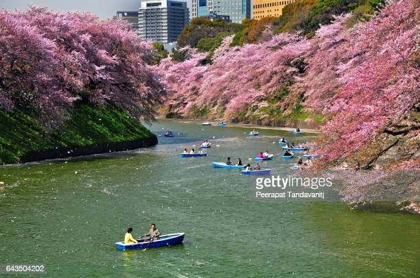 sakura blossom at chidorigafuchi - hanami stock pictures, royalty-free photos & images