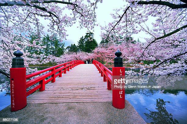 sakura bridge - japan stock pictures, royalty-free photos & images