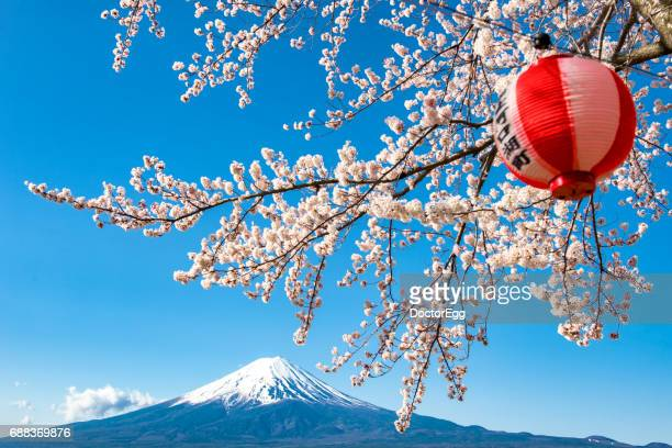 sakura cherry blossom and fuji mountain at kawaguchiko lake, japan - hanami stock pictures, royalty-free photos & images