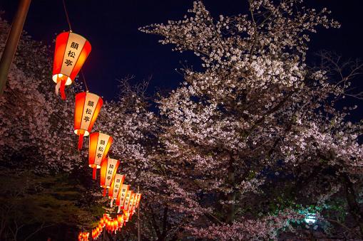 Sakura Festival lanterns and fully-bloomed cherry blossoms at night,Ueno Park(Ueno Koen),Ueno district of Taito,Tokyo,Japan. - gettyimageskorea