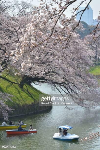 Sakura in Tokyo city center