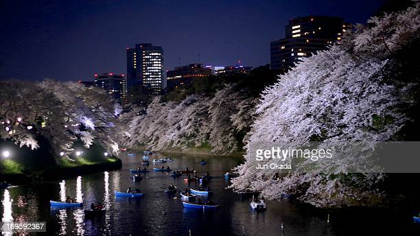 Sakura Night view