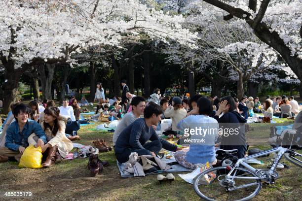sakura picnic - hanami stock pictures, royalty-free photos & images