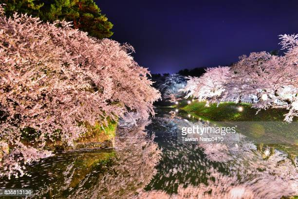 sakura reflection
