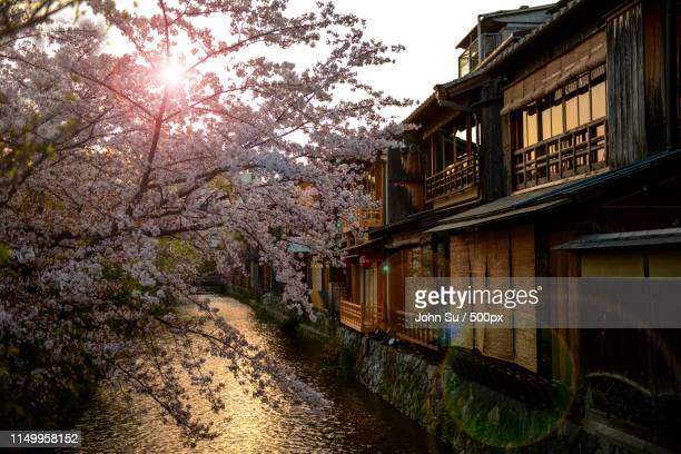 Sakura Season At Gion Kyoto (Gion, Gion)