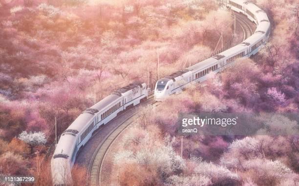 sakura train - high speed train stock pictures, royalty-free photos & images