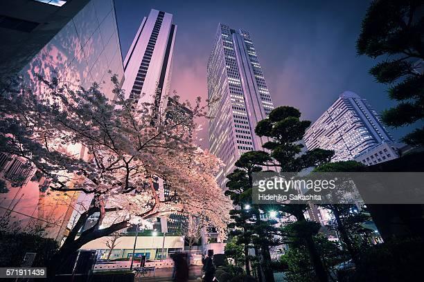 Sakura Tree at Urban Night