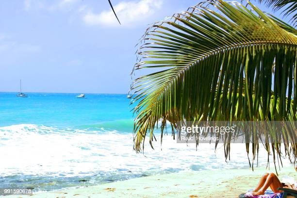 sal nap - cape verde stock pictures, royalty-free photos & images