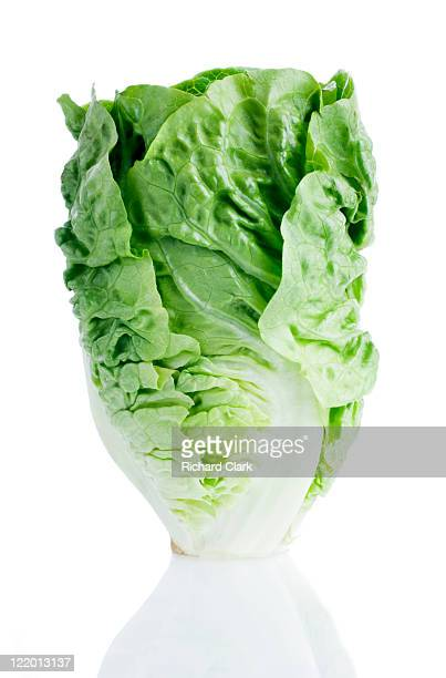 Salad gem lettuce