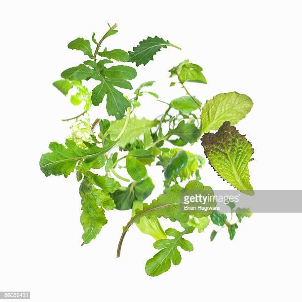 salad greens - leaf lettuce stock pictures, royalty-free photos & images