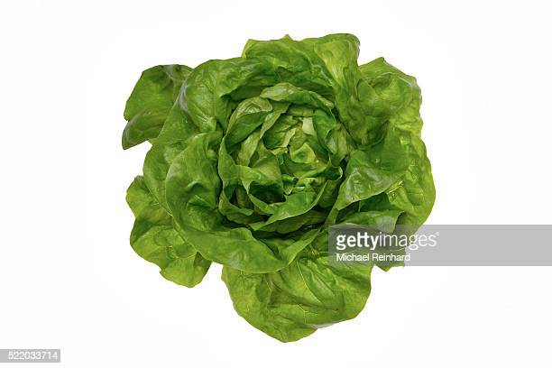 salad - lettuce stock pictures, royalty-free photos & images