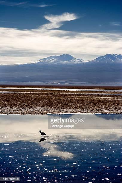 Salar de Atacama covered in water