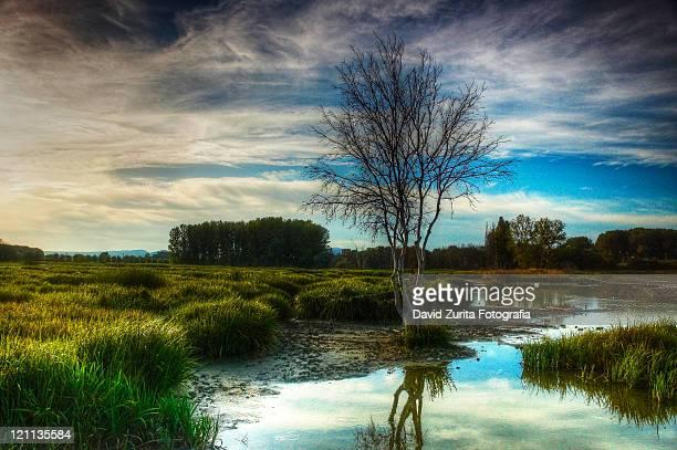 salburua wetland - ビトリア=ガステイス ストックフォトと画像
