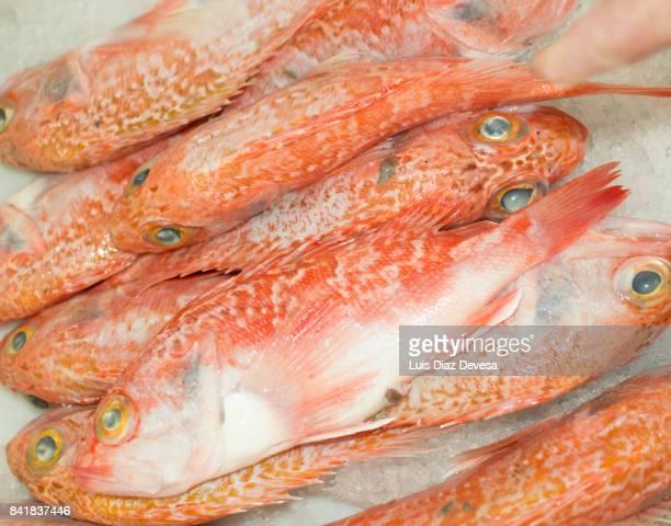 sale of fish fresh on the market - merluza fotografías e imágenes de stock
