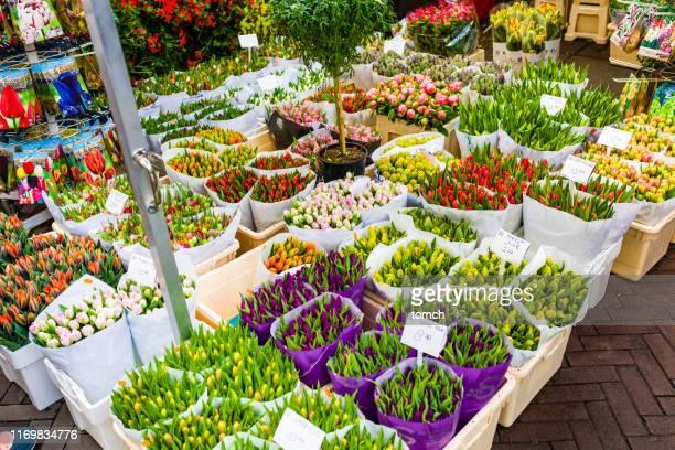 venta de tulipanes en el mercado de flores en amsterdam en la primavera. los países bajos son el líder mundial en la exportación de tulipanes y otras plantas bulbosas. amsterdam es la capital y la ciudad más poblada de los países bajos. amsterdam se e - amsterdam fotografías e imágenes de stock
