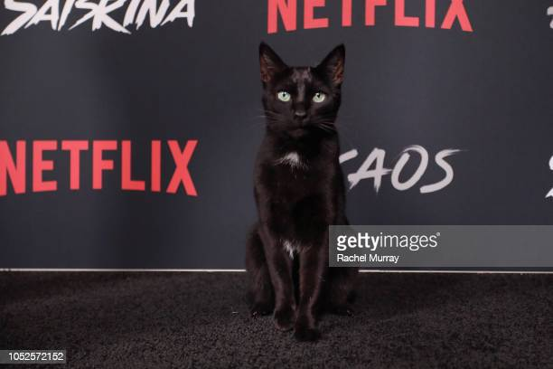 Salem Saberhagen attends Netflix Original Series Chilling Adventures of Sabrina red carpet and premiere event on October 19 2018 in Los Angeles...
