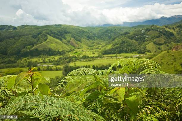 salento, colombia - valley stock pictures, royalty-free photos & images