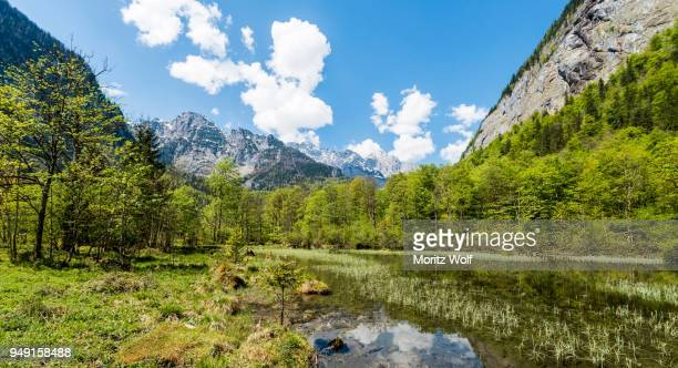 saletbach, stream, salet am koenigssee, national park berchtesgaden, berchtesgadener land, upper bavaria, bavaria, germany - berchtesgaden national park stock photos and pictures
