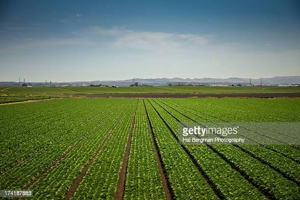 Salinas Farm