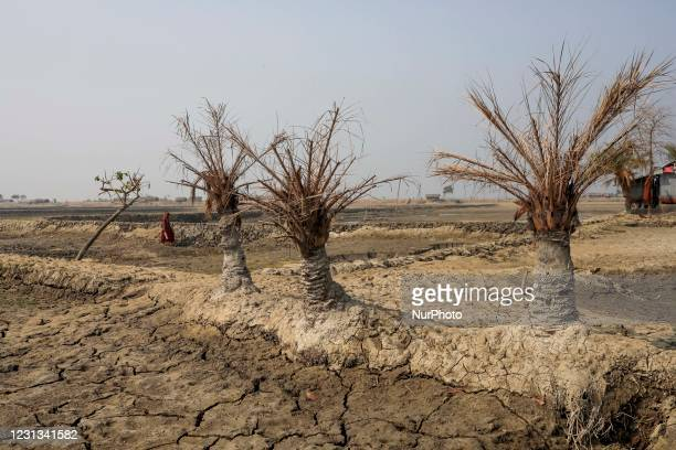Salinity effect seen in soil as a result trees has died after Cyclone amphan hit in Satkhira on February 23, 2021.