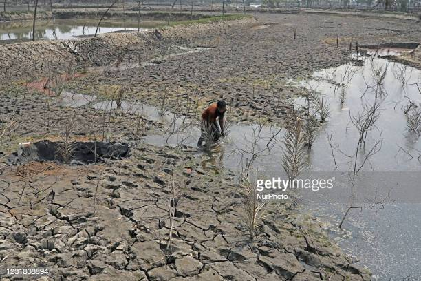 Salinity effect seen in soil as a result trees has died after Cyclone amphan hit in Satkhira, Bangladesh on March 19, 2021. Deep cracks seen in a...
