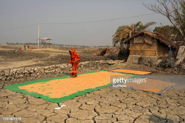 Salinity effect seen in soil as a result trees has died after Cyclone amphan hit in Satkhira, Bangladesh on March 20, 2021. Deep cracks seen in a...