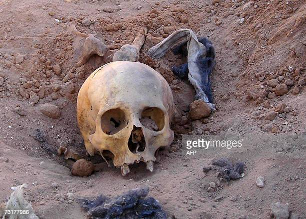 A human skull is pictured 02 February 2007 at a mass grave that was discovered the day before west of the town of Salman in southern Iraq near the...
