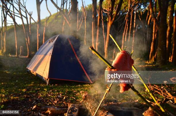 Salmon cooked artisanly in camp