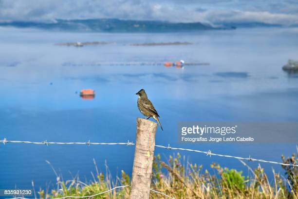 Salmon farm in Yal canal with a bird standing in a fence post.