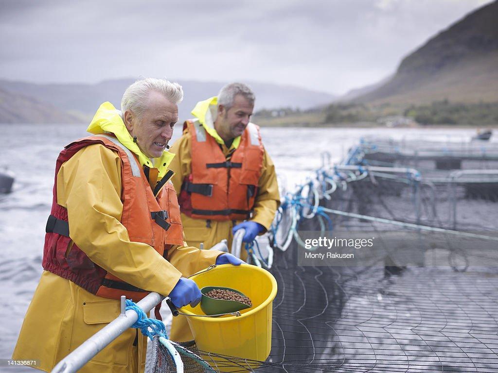 Salmon farmers feeding fish on pontoon of Scottish salmon farm over sea loch : Stock Photo