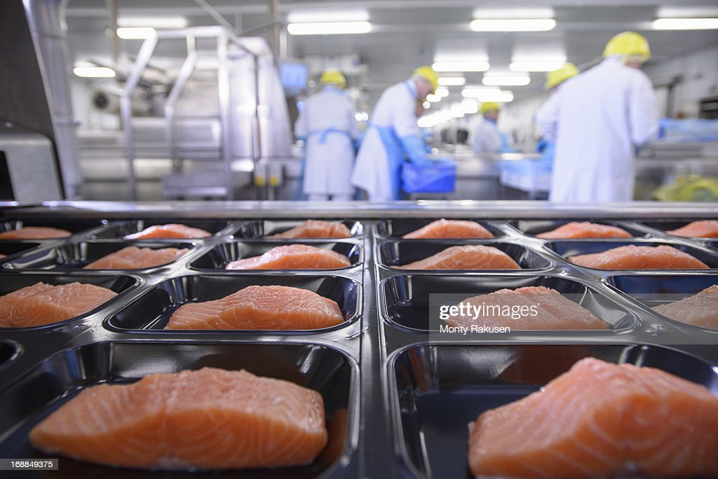 Salmon fillets on packaging in foreground of busy food factory : Stock Photo