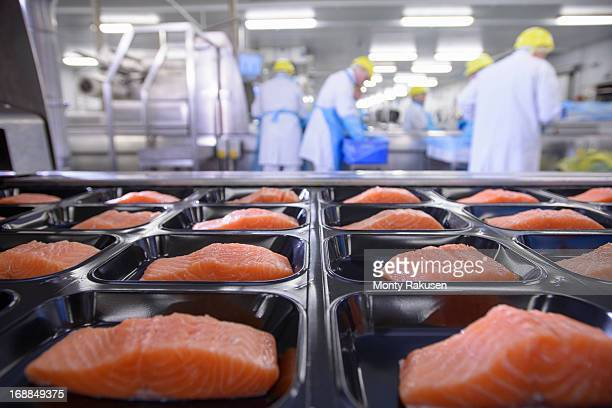 Salmon fillets on packaging in foreground of busy food factory