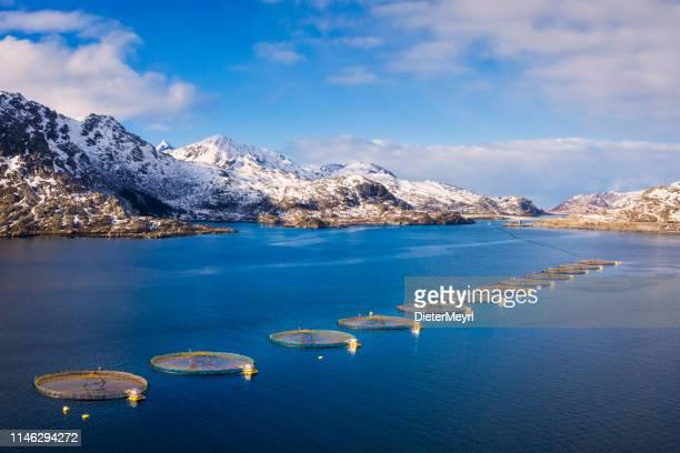 piscifactoría de salmón en el fiordo noruego, lofoten-noruega - noruega fotografías e imágenes de stock