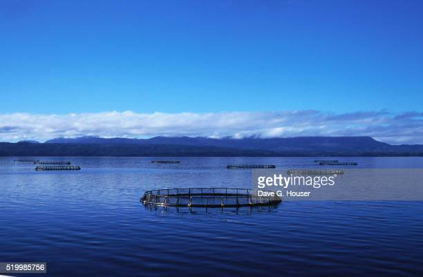 Salmon Fish Farms in Macquarie Harbour