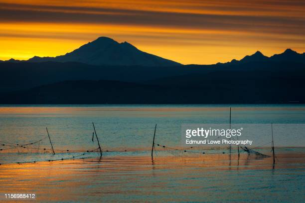 salmon fish traps with mt. baker in the background at sunrise. - pacific ocean stock pictures, royalty-free photos & images