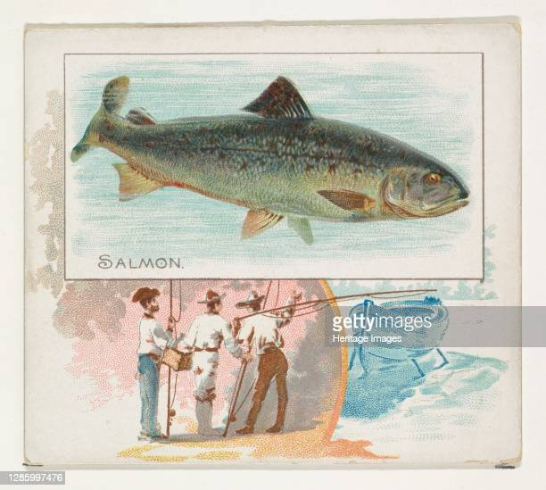 Salmon, from Fish from American Waters series for Allen & Ginter Cigarettes, 1889. Artist Allen & Ginter.