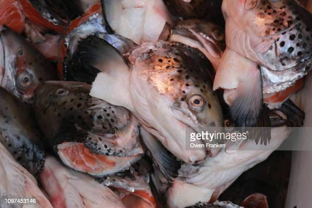 Salmon heads for sale in a fish market, Albert Cuyp Market in Amsterdam