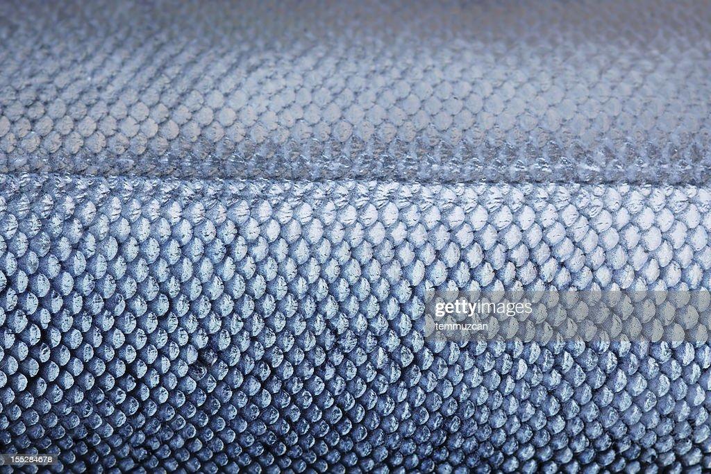 Salmon : Stock Photo