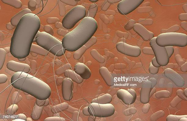 salmonella - salmonella stock photos and pictures