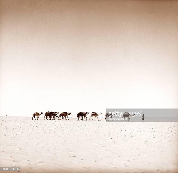 salt caravan dans le désert du sahara - touareg photos et images de collection