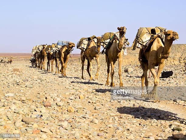 salt-caravan - eritrea stock-fotos und bilder