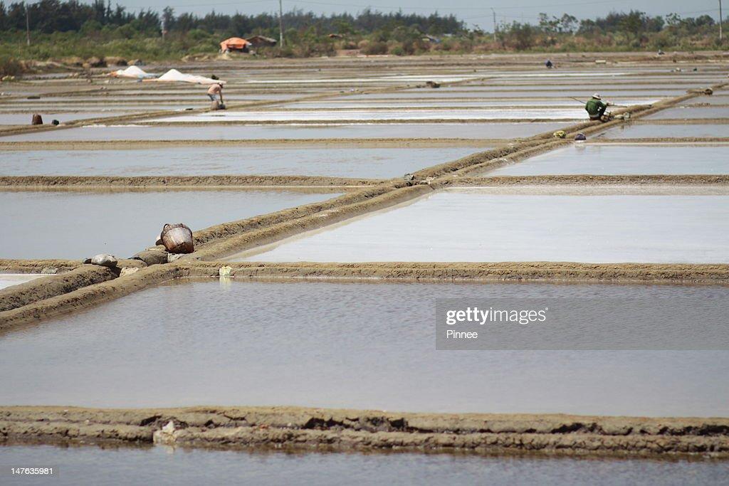Salt Farm : Stock Photo