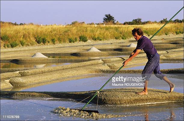 Salt farmer gathering salt in the salt marshes in Noirmoutier Island in Ile de Noirmoutier France on October 17th 2005