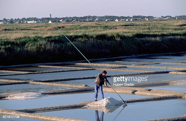 salt flats near guerande - loire atlantique stock pictures, royalty-free photos & images
