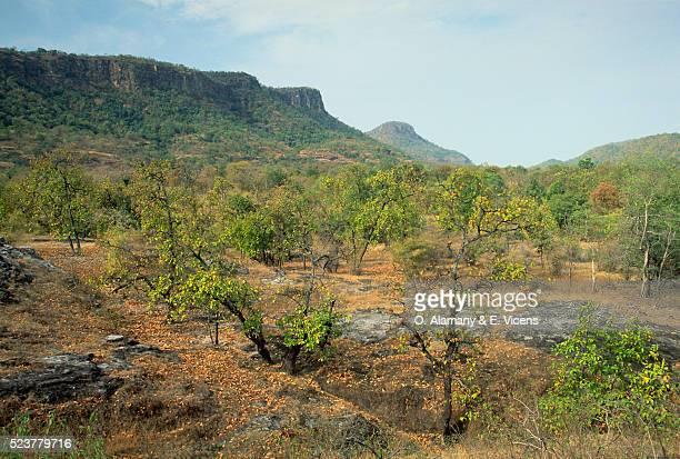 Salt Forests and Hills in Bandhavgarh National Park