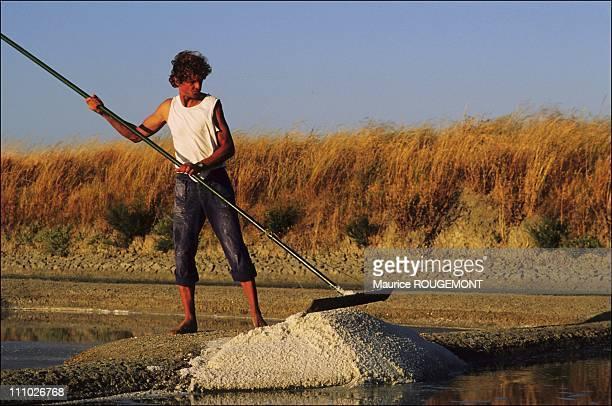 Salt gathered by a salt farmer in the salt marshes in Noirmoutier Island in Ile de Noirmoutier France on October 17th 2005
